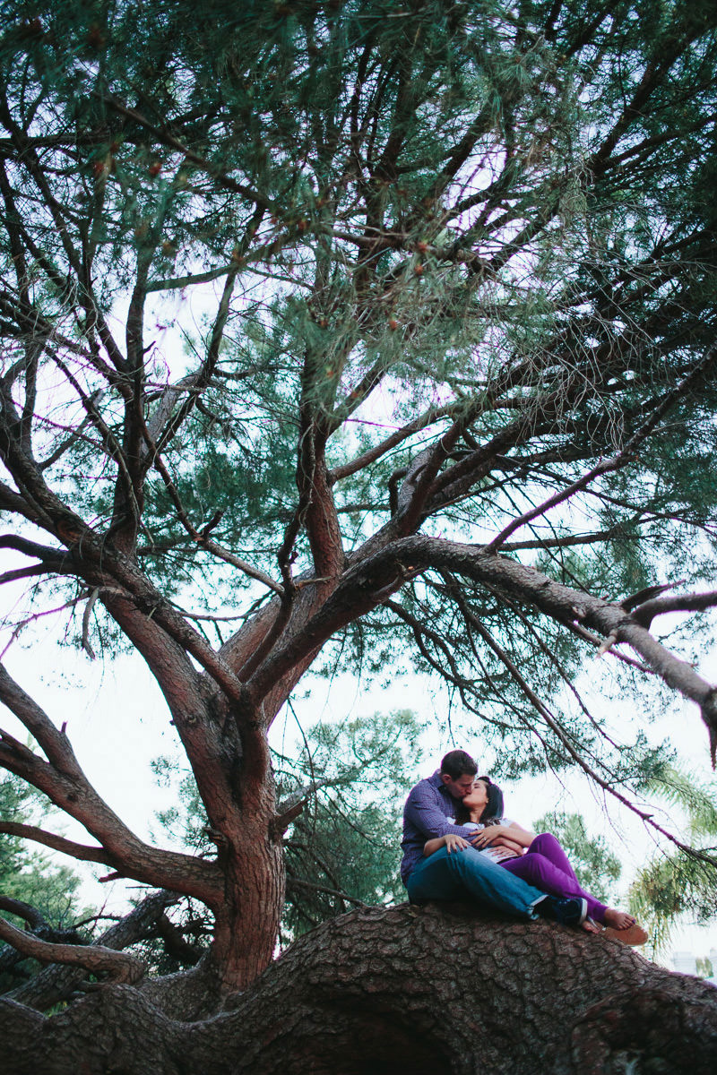 epic engagement photo of couple in swan valley tree