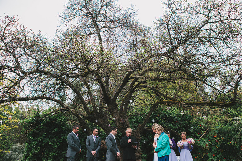 Beautiful perth hills wedding ceremony under mulberry tree, fine art photography